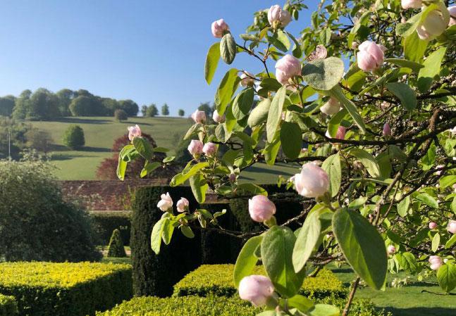 Stonor Manor Spring Blossom